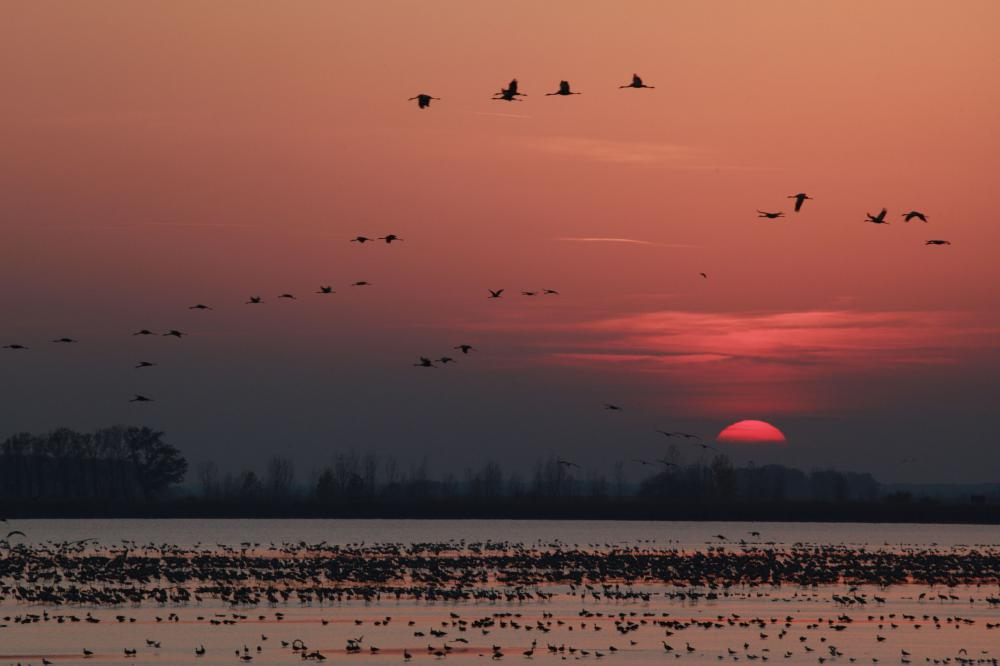 Migratory birds resting in the area. Photograph ©