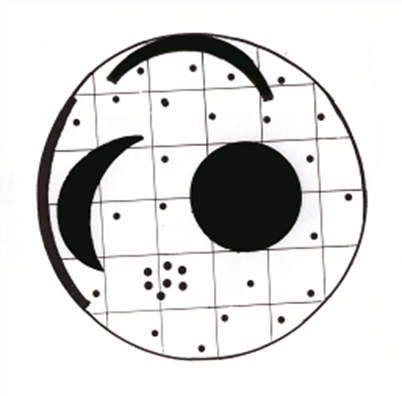 Spacing of the spots on the Nebra Sky Disc. Drawin